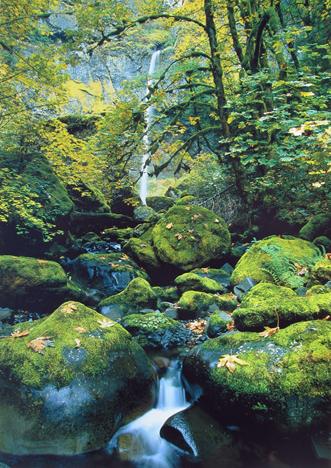 Anthony Cook - Elowah Falls