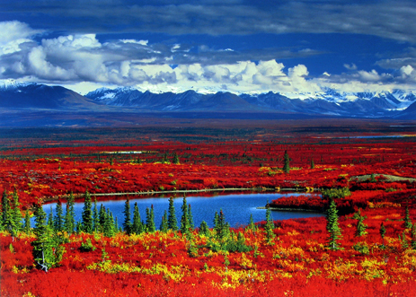 Anthony Cook - Alaska Tundra In Autumn Glory
