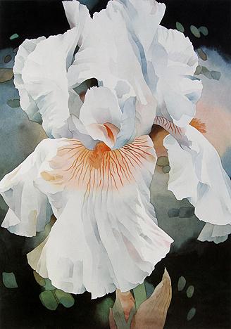 Jean Crane - White Iris