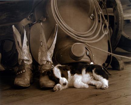Robert  Dawson - Cowboy Puppy